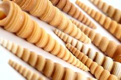 Spiral long sea cockleshells Stock Photo