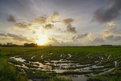 Spiral modell på risfältfältet Royaltyfri Fotografi