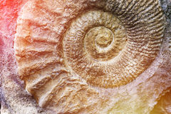 Spiral of nature. Discovery of prehistoric fauna Royalty Free Stock Photography