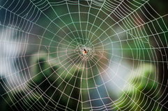 Spiral Orb Web With A Spider Stock Images