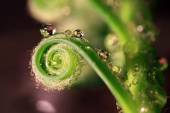 Spiral orbit. Beautiful shape of a flower with waterdrops Royalty Free Stock Photos