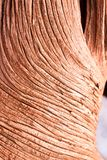 Spiral pattern on a dead tree. Close up of a spiral pattern made of the bark of a dead tree in southwestern Utah stock photography