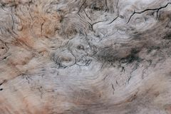 Spiral pattern in a tree trunk. Beautiful spiral patterns on the inside of a tree trunk stock photos