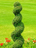 Spiral plant Stock Images