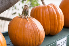 Spiral Pumpkin Royalty Free Stock Photo
