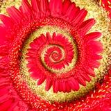 Spiral röd gerberablomma fotografering för bildbyråer