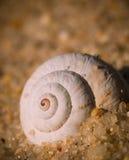 Spiral on sea. Spiral on galician sea Mar de Lira Royalty Free Stock Photography
