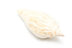 Spiral sea shell Royalty Free Stock Photos