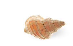 Spiral sea shell Stock Photography