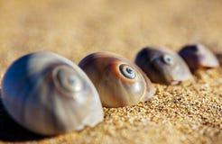 Spiral Sea Shells Stock Photo