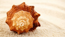 Spiral seashell. Royalty Free Stock Image