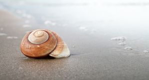 Spiral seashell royalty free stock photo