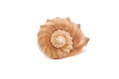 Spiral Seashell. Isolated on white background Stock Photo