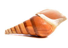Spiral Seashell Royalty Free Stock Image