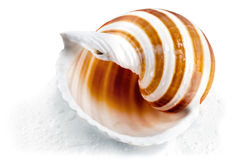 Spiral seashell. Stock Photos