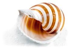 Spiral seashell. Stock Photos