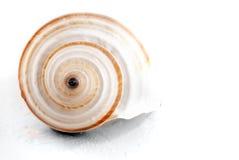 Spiral seashell. Royalty Free Stock Photography