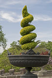 Spiral shaped potted cedar Stock Photos