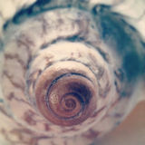 Spiral shell Royalty Free Stock Photos