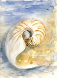 Spiral shell Stock Photo