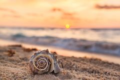 Spiral Shell on a Tropical Sandy Beach with Sunrise over Ocean a. S a background in Mexico, Cancun, selective focus, vacation concept royalty free stock photography