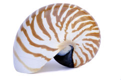 Spiral shell. For web work Stock Photography