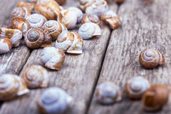 Spiral shells on a wooden grunge board decorative photo Stock Photography