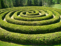A spiral shrub maze. A maze made of shrubbery and spiralling towards the center Royalty Free Stock Photo
