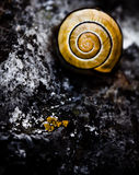 Spiral Snail Stock Photos