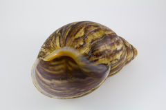 Spiral snail shell Stock Photos