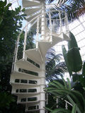 Spiral staircase. In palm house Royalty Free Stock Photography