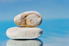 Spiral in a stone. The sea pebble reflects in mirror water in the summer morning Royalty Free Stock Image