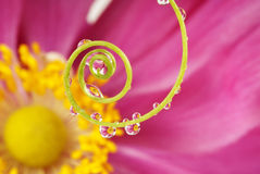 Spiral and water drops Royalty Free Stock Photography