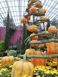 Spirala pumpor vid halloween Royaltyfria Bilder
