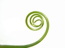 spirala rattan Zdjęcia Stock