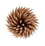 Spirala tandpetare Royaltyfri Bild