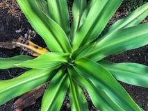 spirala textured zielony drzewko palmowe liść Zdjęcia Stock