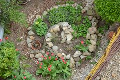 Spirale d'herbe en premier ressort photo libre de droits