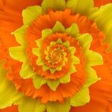 Spirale de fleur images libres de droits
