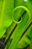 Spirale de la lame de fougère de l'emboîtement de l'oiseau Image stock