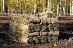 Spirale des frischen gerollten Grasrasens Stockfoto