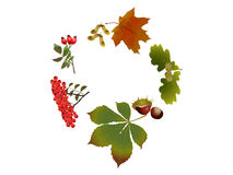 Spirale di autunno Immagini Stock Libere da Diritti