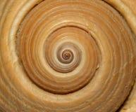 Spirale eines mit Filigran geschmückten großen griechischen Schneckeshells Lizenzfreies Stockfoto