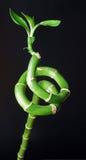 Spirale en bambou avec le fond noir Photographie stock libre de droits