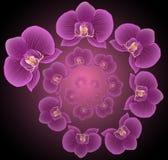 Spiralen av orkidér Royaltyfria Foton
