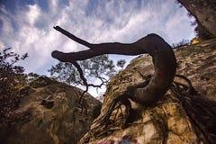 Spirales d'arbre vers le ciel photo stock