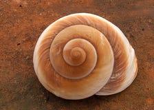 spiralnie Zdjęcie Stock