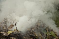 Thick Smoke is Released from a Pile of Leaves stock photo