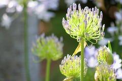 spirande blommor Arkivfoton
