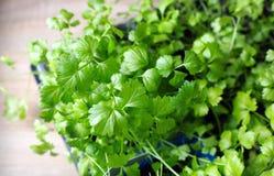 Spirar förberedd celeriac för att dyka Arkivfoton